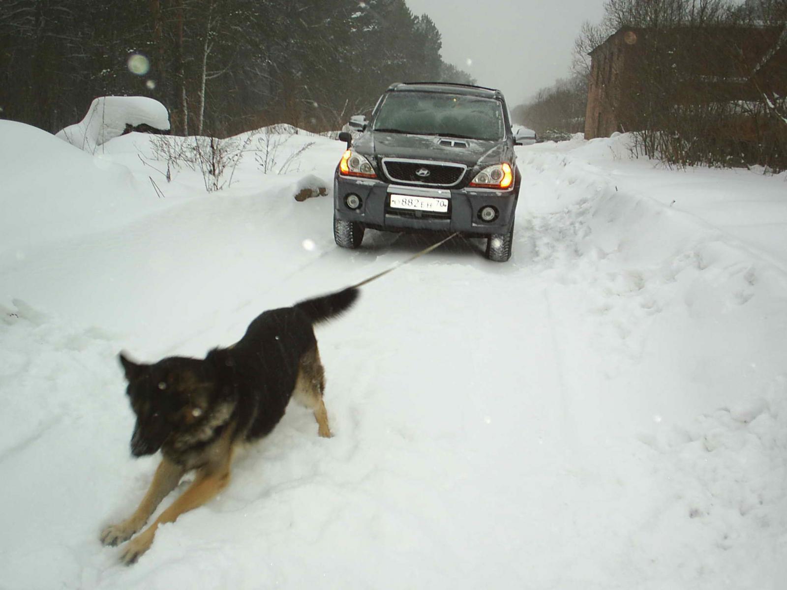 Зима, Сибирь